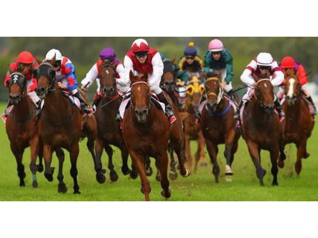 Have Fun at Race Night | FreeAds.info