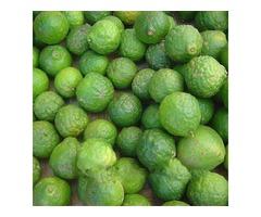 20Pcs Lime Seeds Citrus Aurantifolia Organic Fruit Seeds Lemon Tree Bonsai for Home Garden