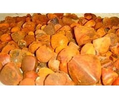 Best quality Ox cow Gallstones , cattle Gallstones