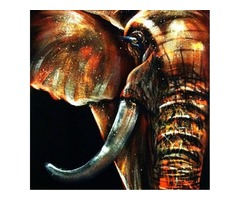 50x50cm Modern Abstract Huge Elephant Wall Art Decor Oil Painting On Canvas No Frame